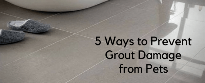 5 Ways to Prevent Grout Damage from Pets with Americhem LLC, AZ