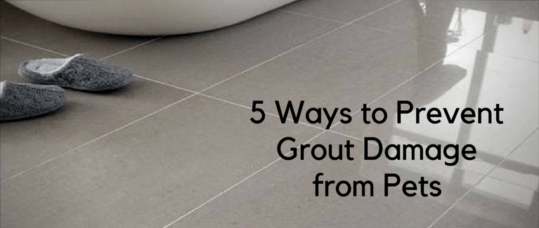 5 Ways To Prevent Grout Damage From Pets Americhem Llc